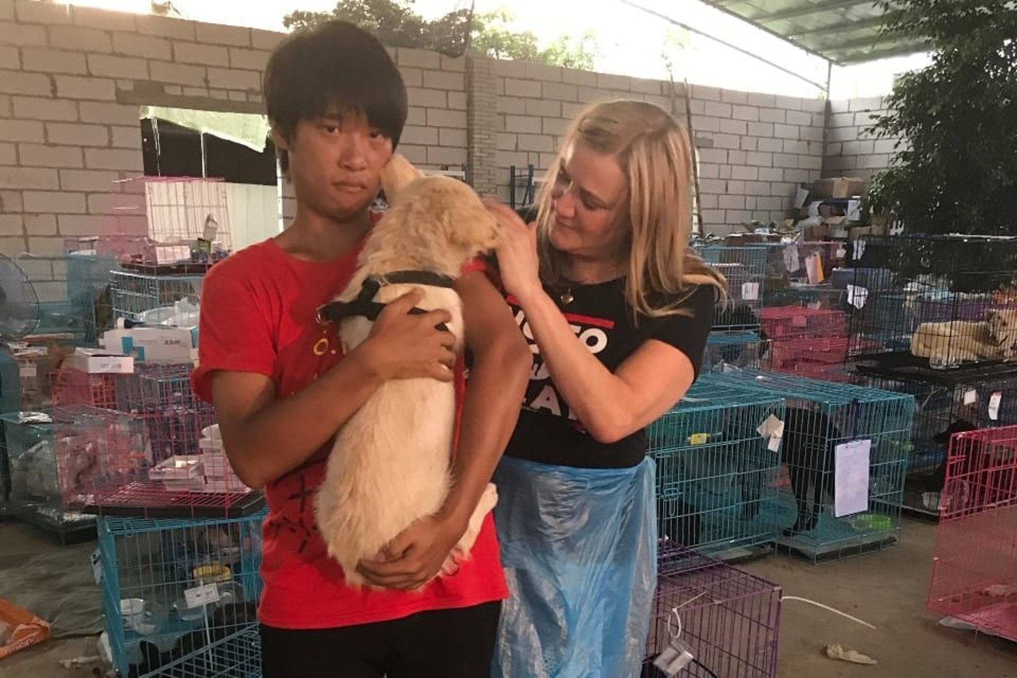 Coronavirus could be a good thing for Yulin Dog Meat Festival campaigners -  here's why | Blackpool Gazette
