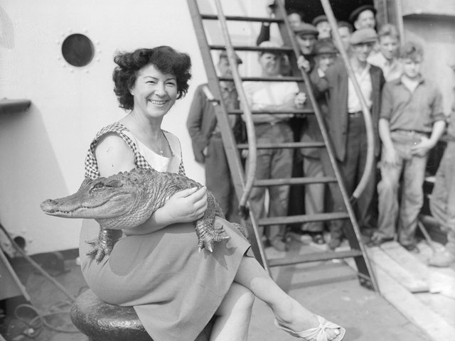 Performer Koringa with one of the alligators in 1955.  Picture: Getty Images