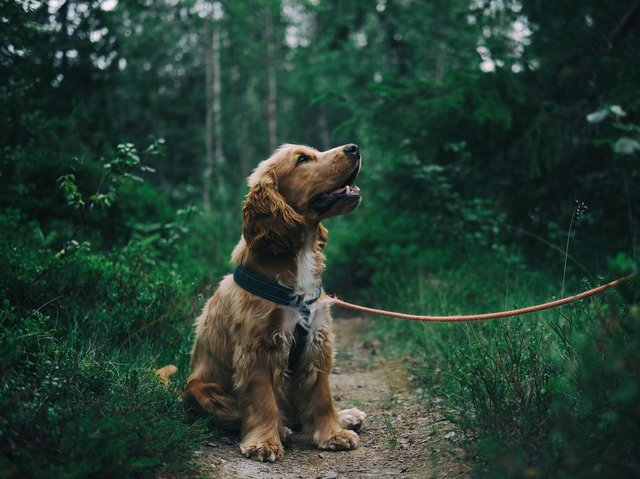 5 dog walks in Blackpool and the Fylde coast