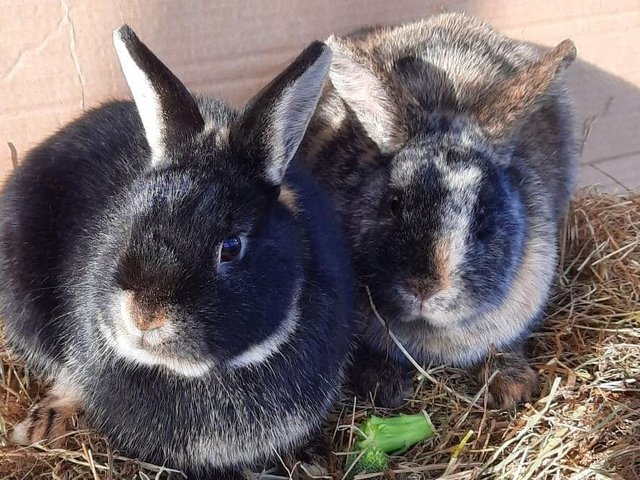 Poppy and Violet need a new home together