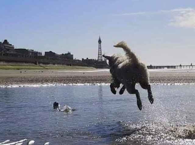 Rachel's pooch Lando having a fantastic time playing fetch on a sunny day in Blackpool.