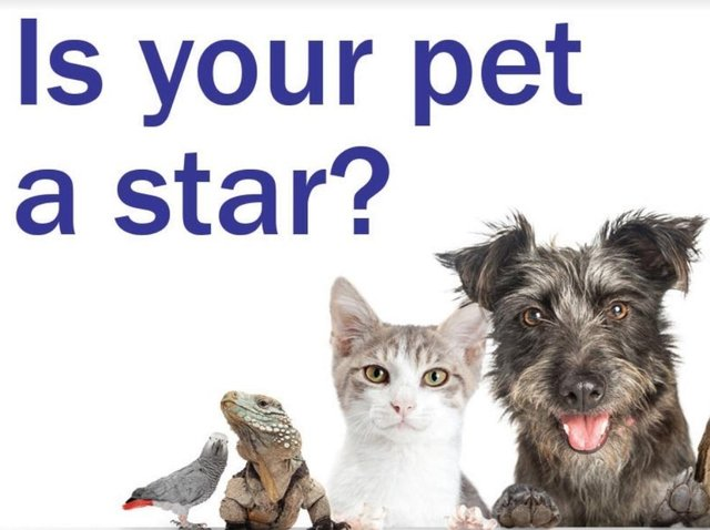 Enter our Top Pet competition and you could win a £50 Pets at Home voucher
