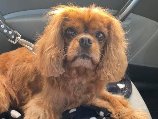 Ruby, the Motley family's pet, died after the the attack on St Annes Promenade