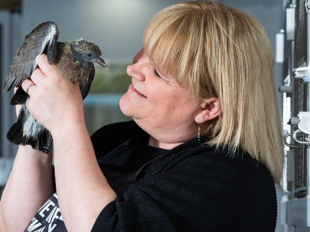 Pigeon rescue