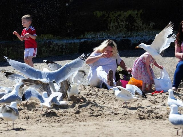 Blackpool seagulls have been ranked the worst in the country for food-stealing