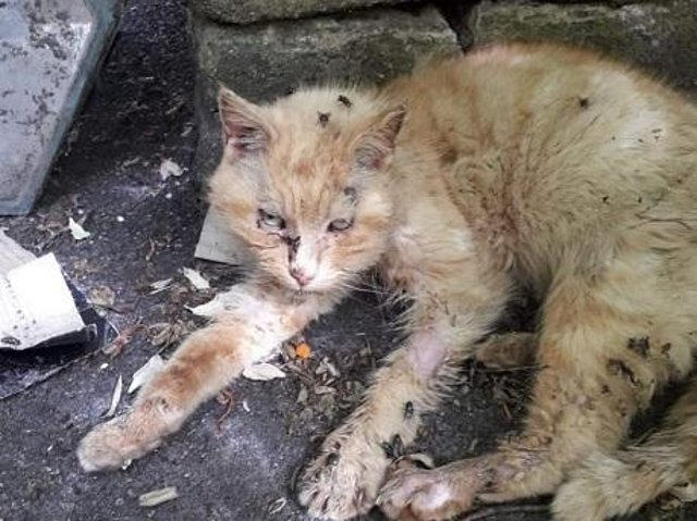 Sonny was found in a terrible condition. Picture by Tender Paws