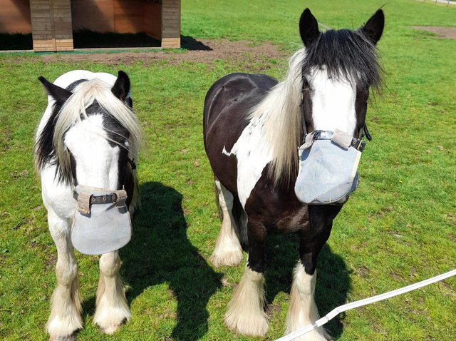 Penny Farm's residents keeping safe in their own face masks - though these ones aren't to protect against coronavirus! Picture by World Horse Welfare