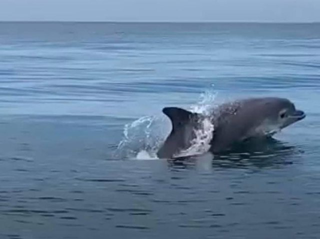 Adam Kluj andVicky Hopkinson said they were four miles off the coast of Blackpool, around Starr Gate, whenthey were surrounded by the pod of bottlenosedolphins last Sunday (June 13). Pic: Adam Kluj