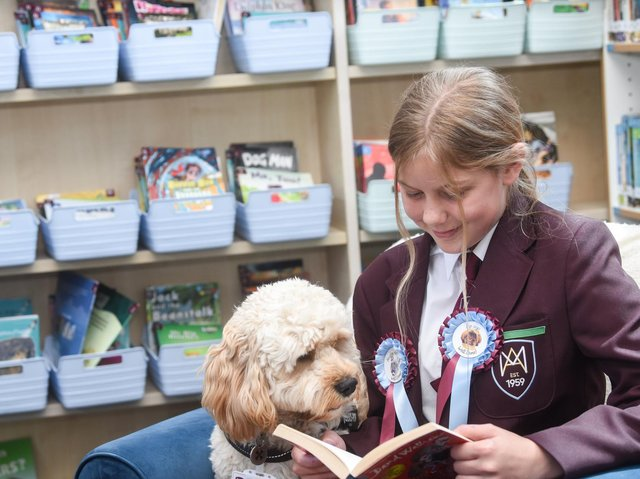 Evie Fratczak-Coyne, 12, reads a book wearing her reading achievement rosettes with Bruce. Picture: Daniel Martino/JPI Media
