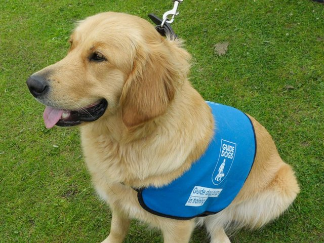Poppy the guide dog