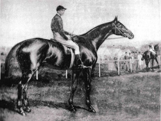 Lancashire's Gold Cup winning racehorse Trayles
